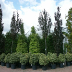 Variety of mature and semi mature trees and planting sundries for you to choose from